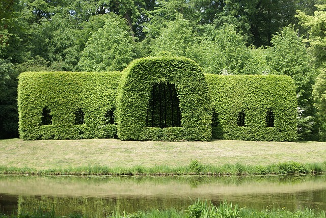 hedge-501556_640